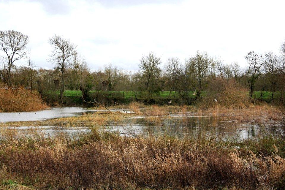 Loire-Atlantique , Un écosystème à préserver , France