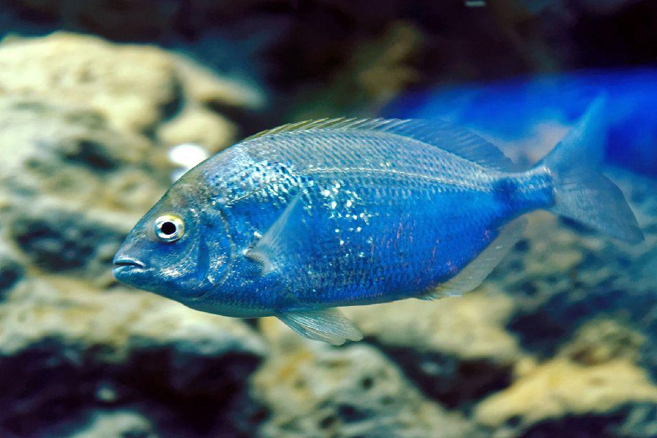 Les îles , Les poissons de l'île d'Yeu , France