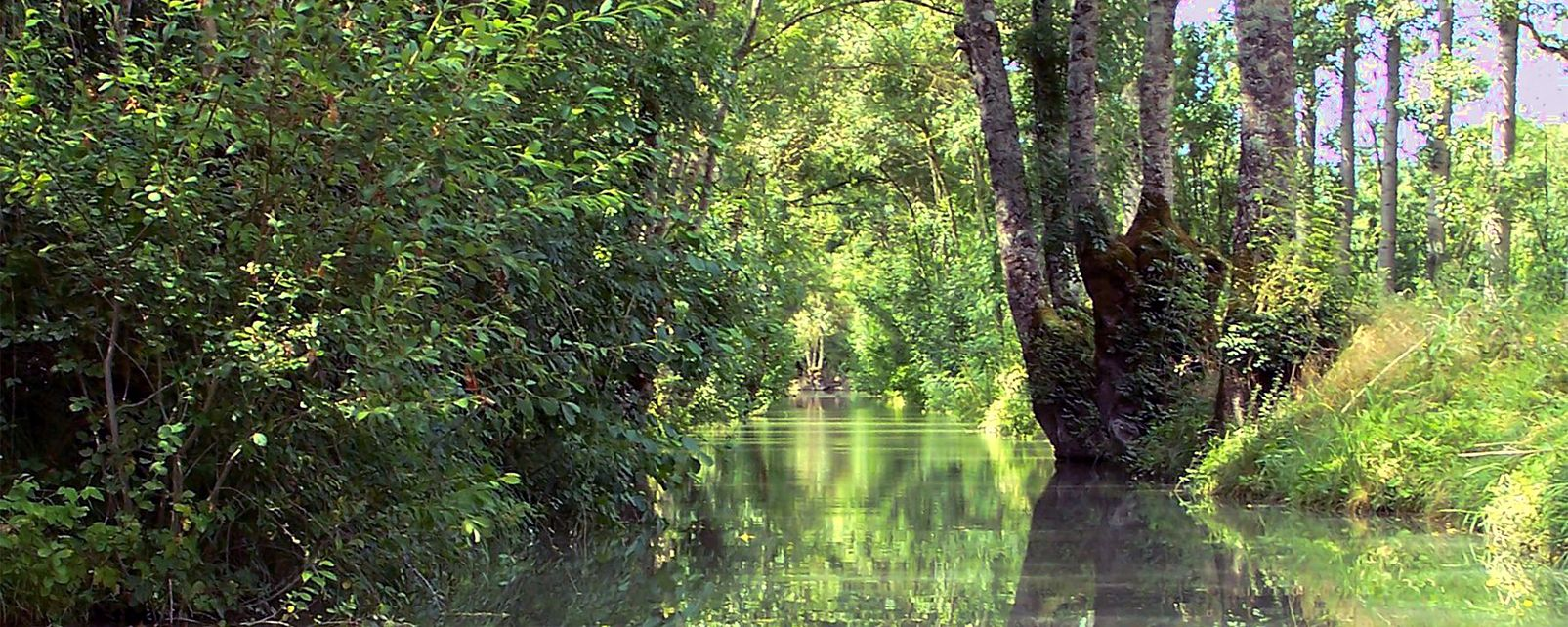 Marais Poitevin (Gulf of Poitou marsh) , The Poitevin Marsh , France