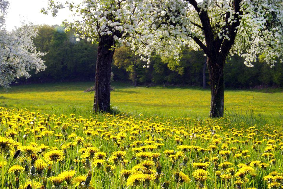 Le parc naturel régional de Normandie-Maine , Une flore diversifiée , France