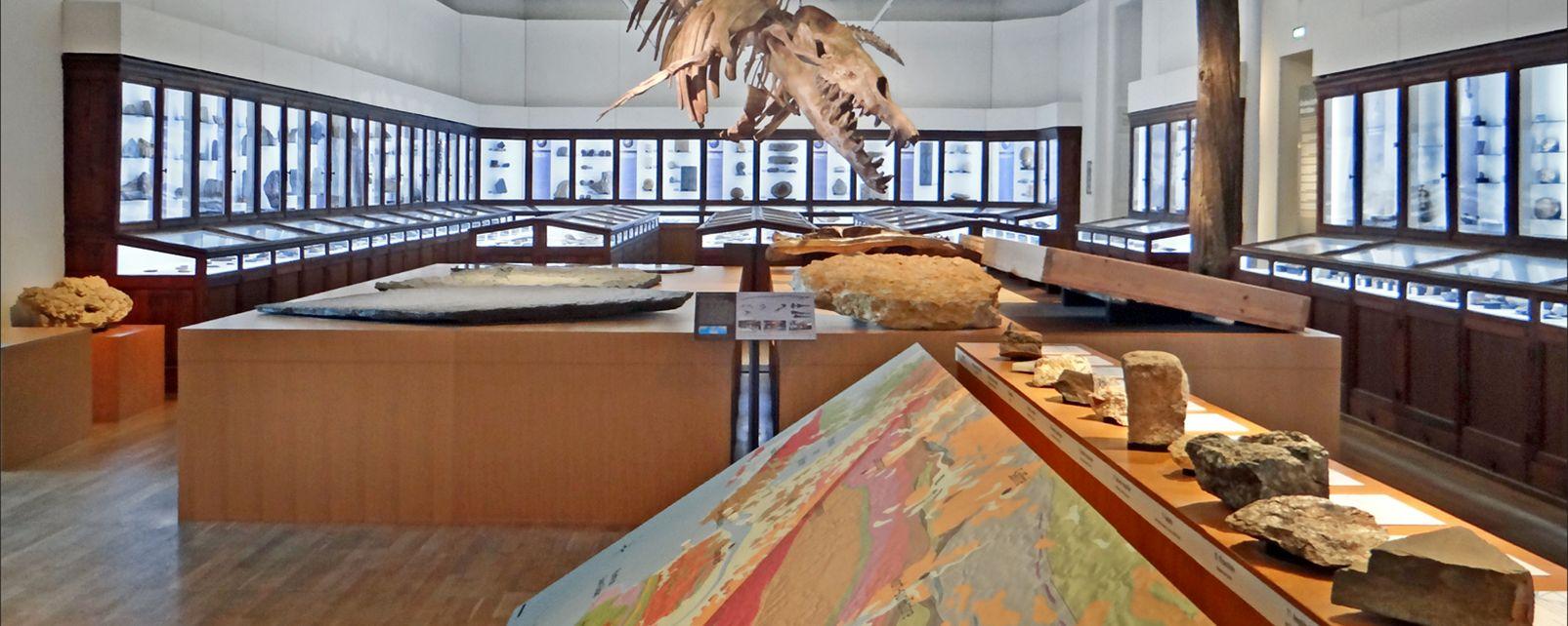 Museo di Storia Naturale di Nantes , Francia