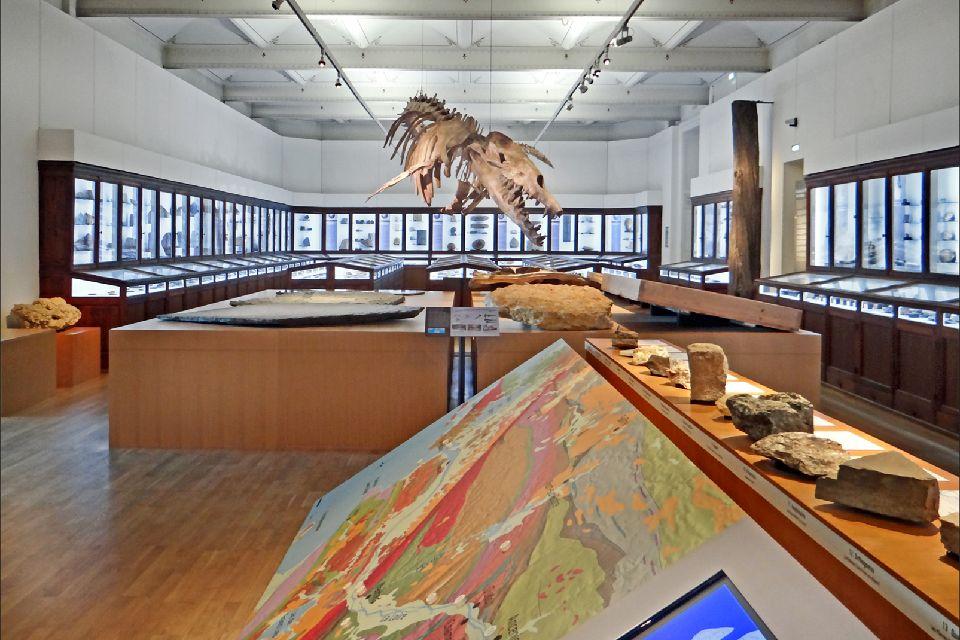 Nantes Natural History Museum , France
