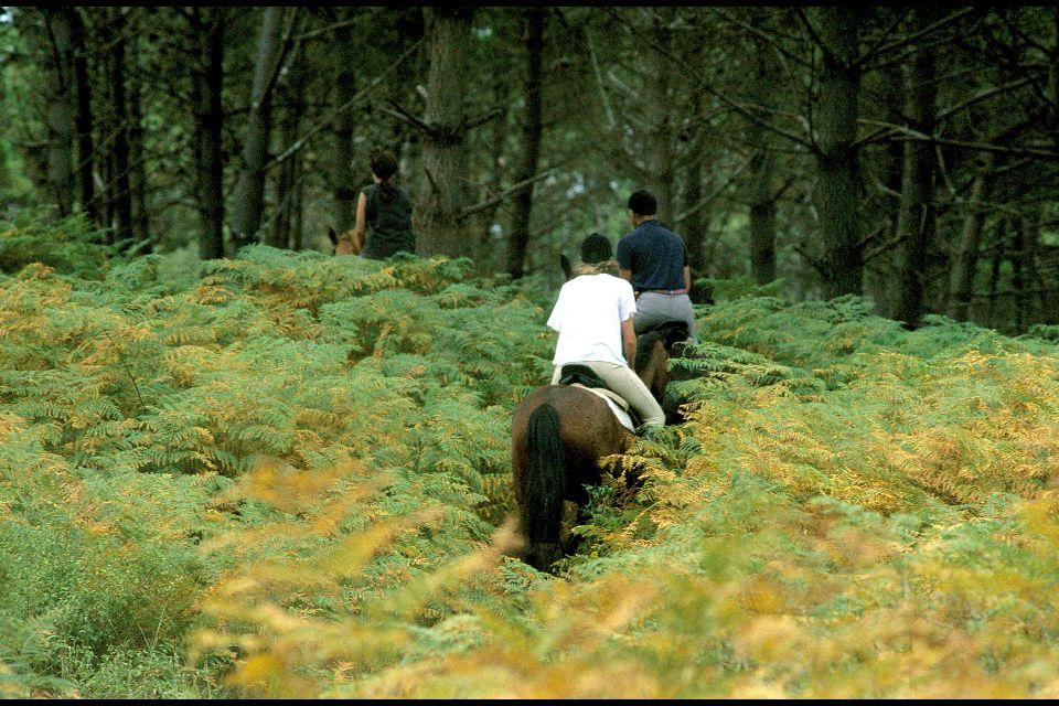 La randonnée , La voie des plantagênets , France