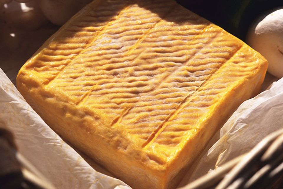The magnificent crust of Maroilles cheese, Maroilles cheese, Enogastronomy, Nord-Pas-de-Calais