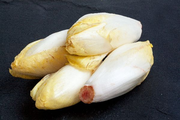 Endives , Chicory from northern France , France