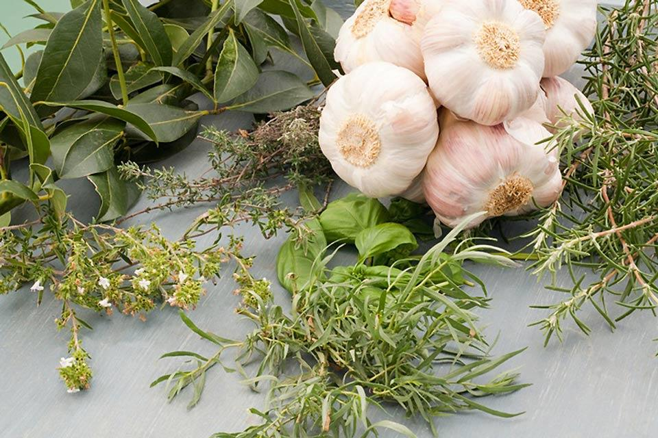 El ajo del norte , Ajo y hierbas aromáticas , Francia