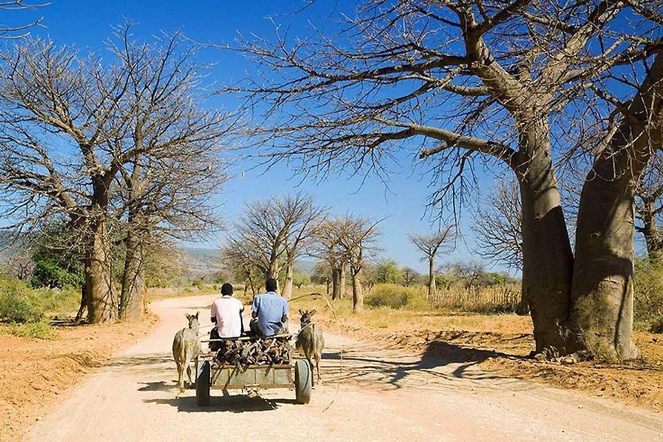 I venda , I Vendas , Sudafrica