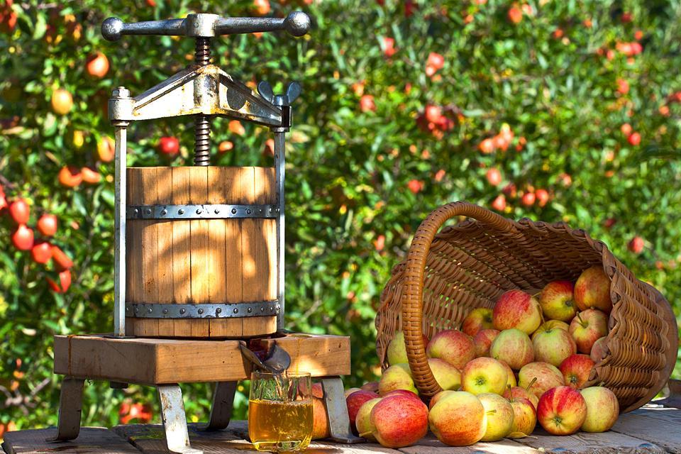 Kochkurse im La Mère Poulard , Der Apfelmost, eine Tradition der Normandie , Frankreich