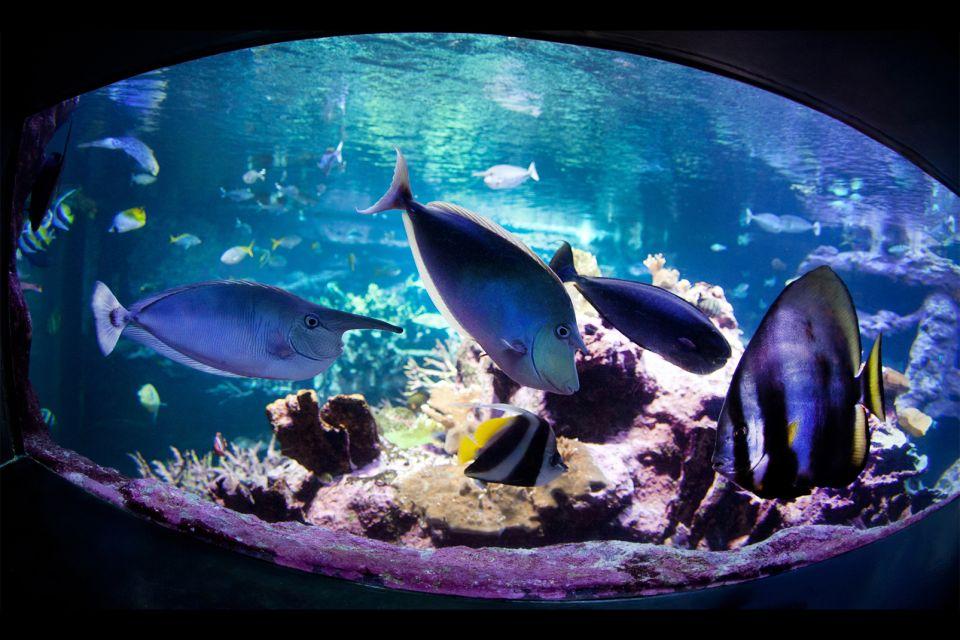 Cité de la Mer, Cherbourg, Normandie, aquarium, France, poisson exotique
