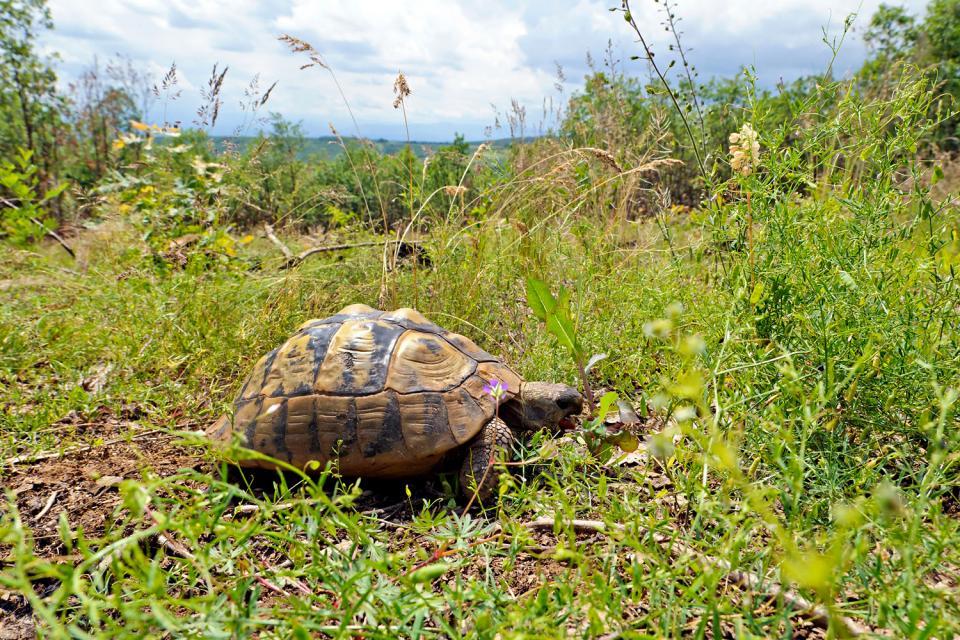 The Village des Tortues tortoise park, Moltifao , France