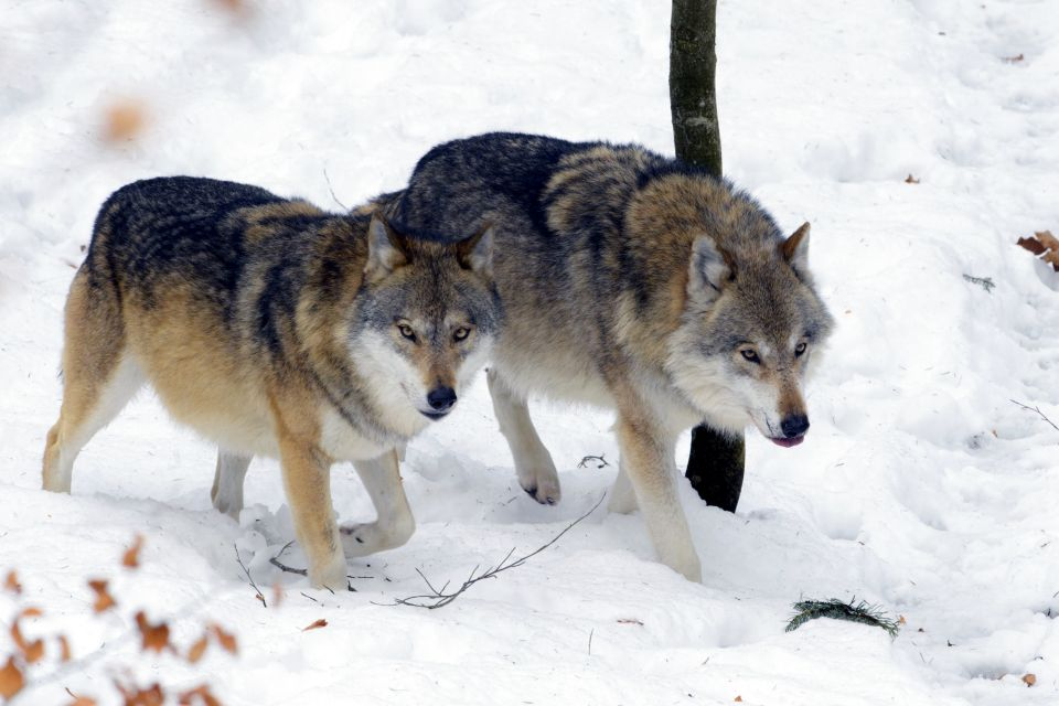 , The fauna, The fauna and flora, Bulgaria