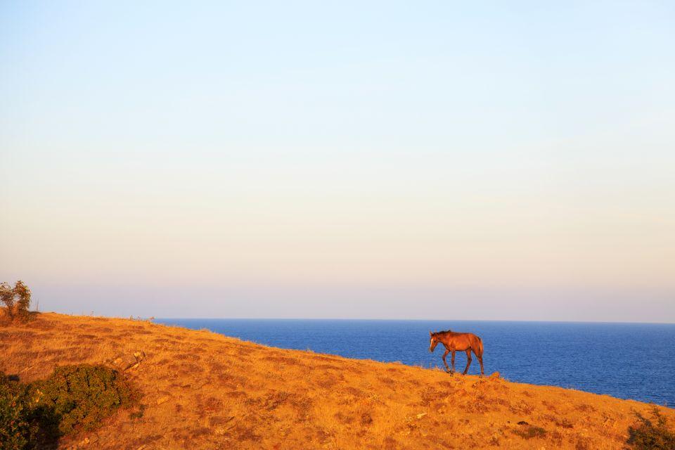 Pferde in den Bergen Bulgariens, Die Fauna, Die Fauna und Flora, Bulgarien