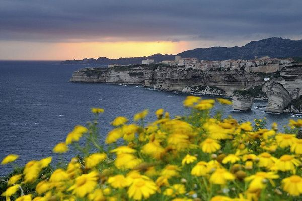 La flora , La macchia mediterranea in riva al mare , Francia