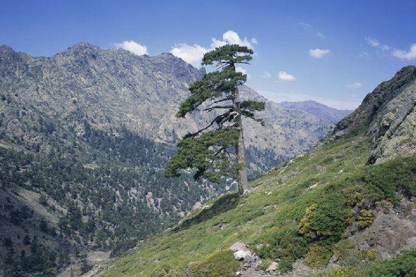 La flora , Francia