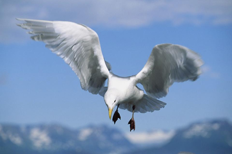 Los pájaros , Francia