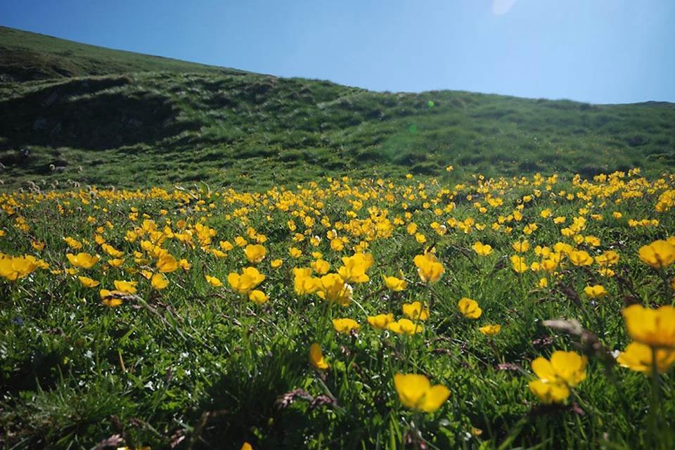 La flore , Bulgarie