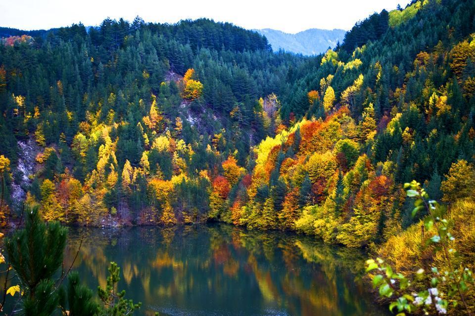 Die Flora , Waldlandschaft in Bulgarien , Bulgarien