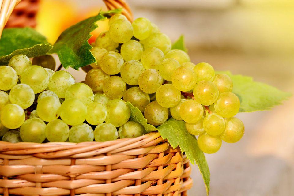 Blanquette de Limoux , The vineyards of Limoux , France