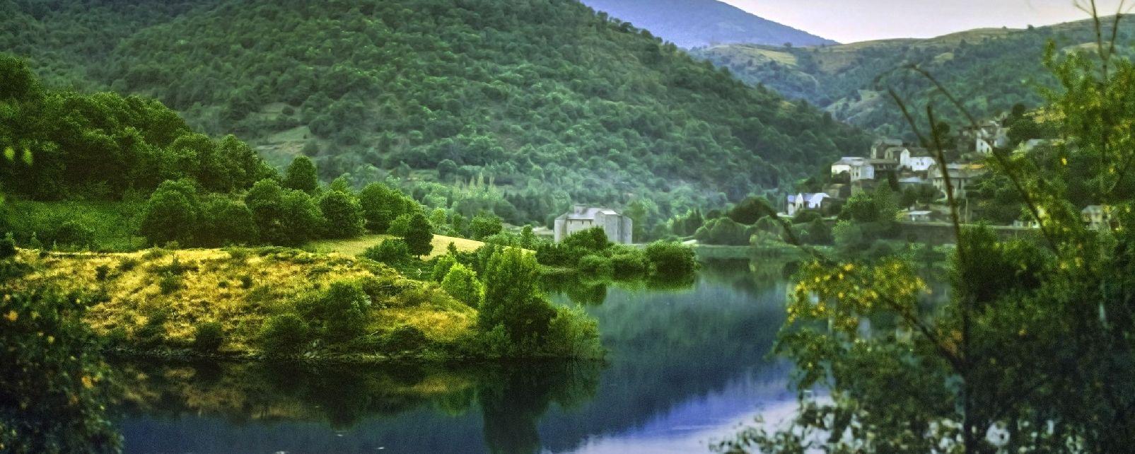 Una regione tra montagne e foreste , La flora del Languedoc-Roussillon , Francia