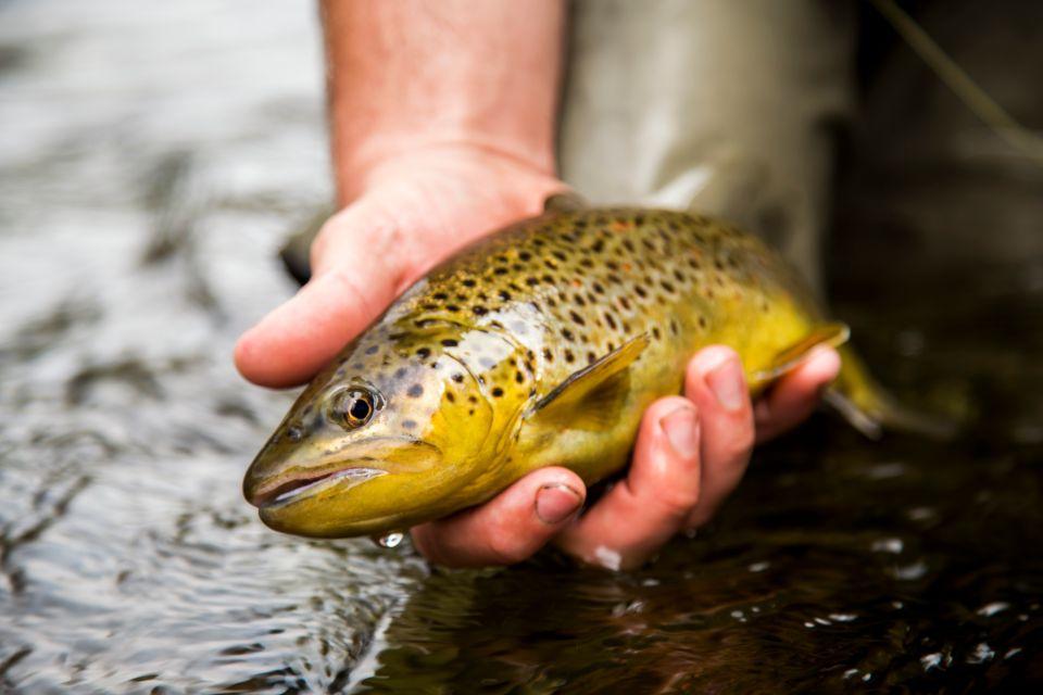 La pesca , Los peces de Auvernia , Francia