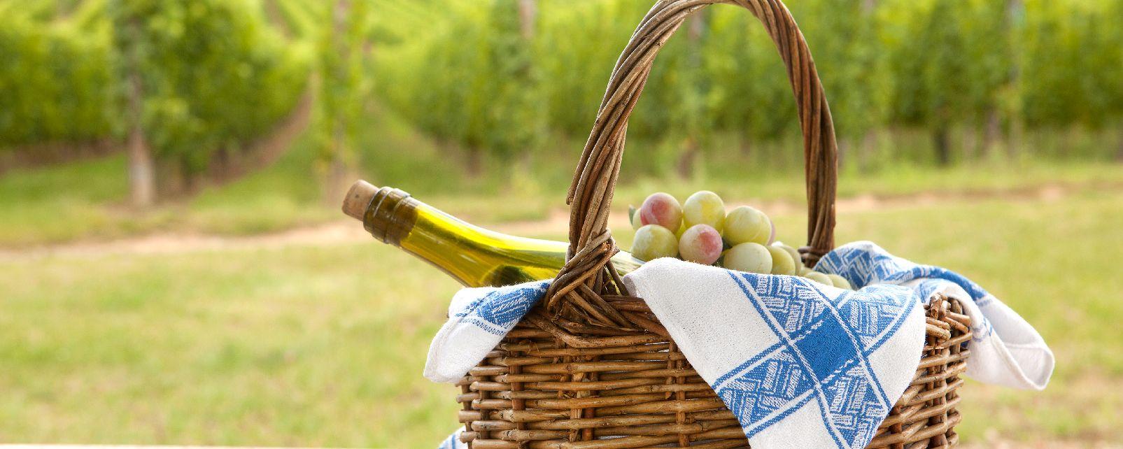 Il sylvaner , I vini dell'Alsazia , Francia