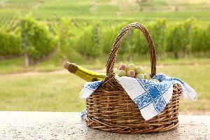 Le sylvaner , Les vins d'Alsace , France