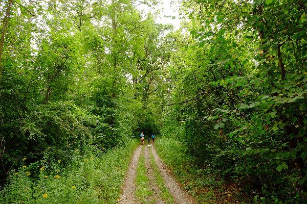 La foresta di Offendorf , Francia