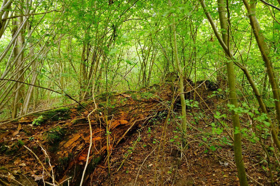 La forêt d'Offendorf , France