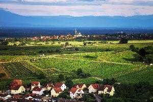 La route des vins , France