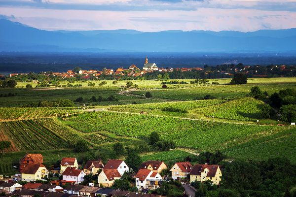 La strada dei vini , La Strada del Vino , Francia