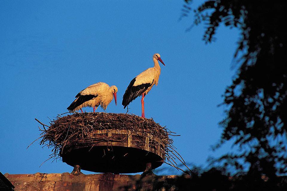 L'écomusée d'Alsace , Les cigognes surveillent l'écomusée , France