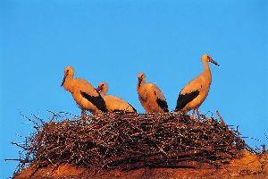 Cigoland , Les cigognes, le symbole alsacien , France