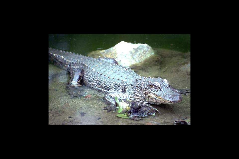 La faune aquatique , Burkina Faso