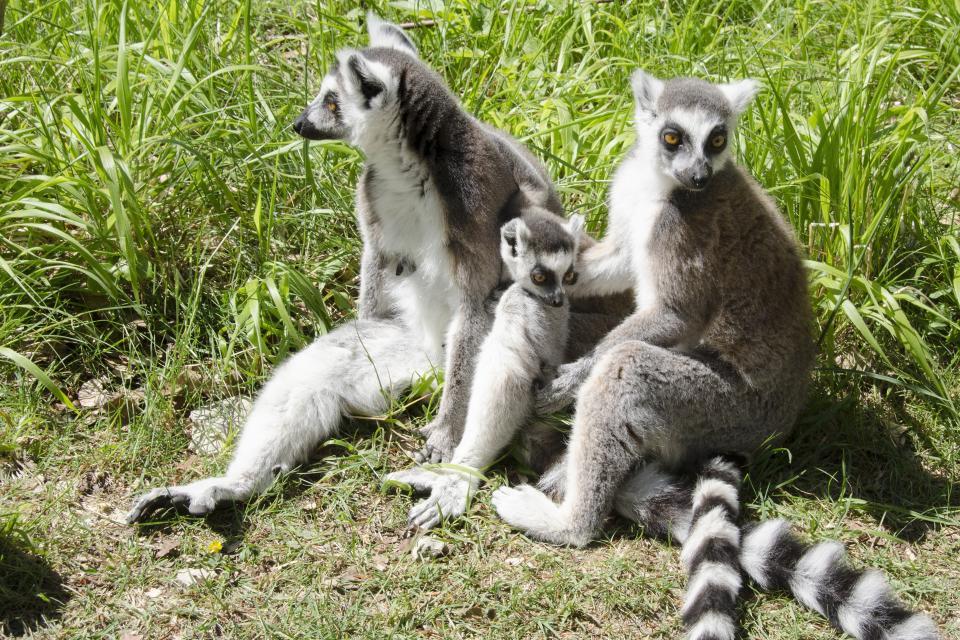 Parc zoologique de la haute touche centre france for Zoo haute touche
