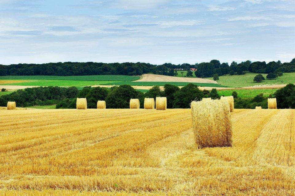 La faune et la flore, campagne, picardie, europe, france, agriculture, blé