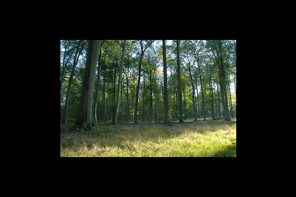 El Oise forestal , Francia
