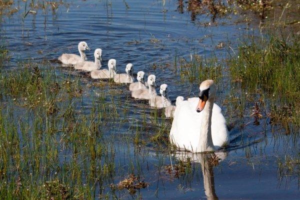 Le parc ornithologique du Marquenterre , France
