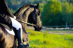 A cheval dans l'Oise , France