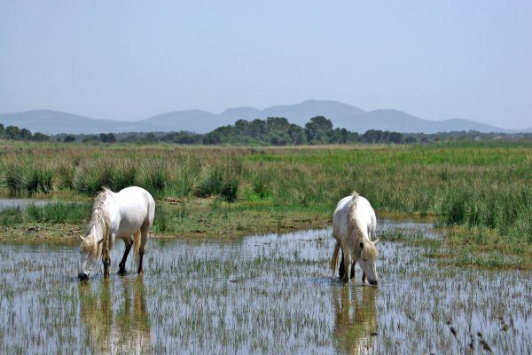 Les paysages, albufera, parc, majorque, baléares, espagne, europe, nature, flore, faune, cheval, animal
