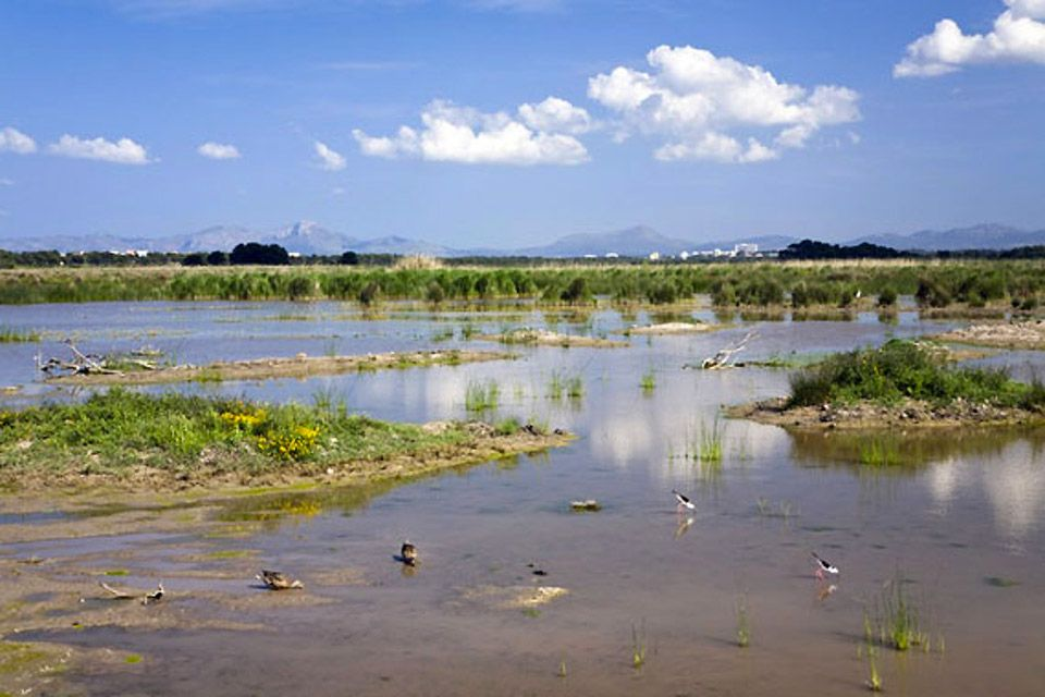 The main path of the park of the Albufera, Albufera Nature Park, Landscapes, The Balearic Islands
