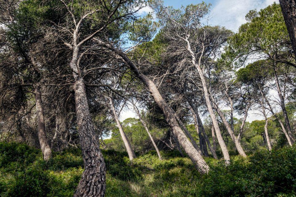 The Albufera Nature Park, Albufera Nature Park, Landscapes, The Balearic Islands