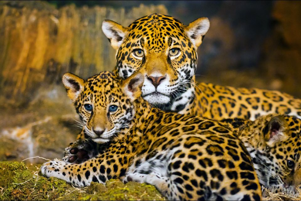 Les grands animaux , Burundi