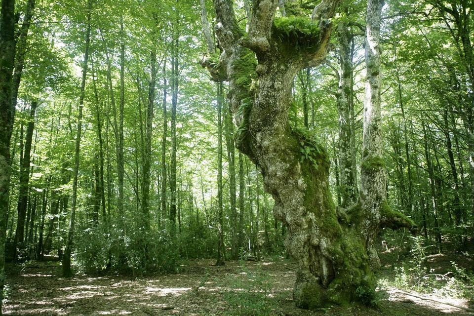 La forêt d'Irati , Espagne