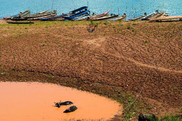The Mekong plain , The buffalo of Mekong, Cambodia , Cambodia