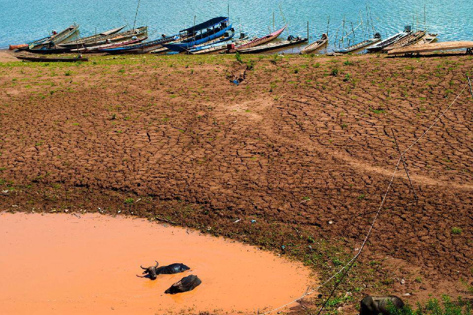 La pianura del Mekong , Bufalo d'acqua cambogiano , Cambogia