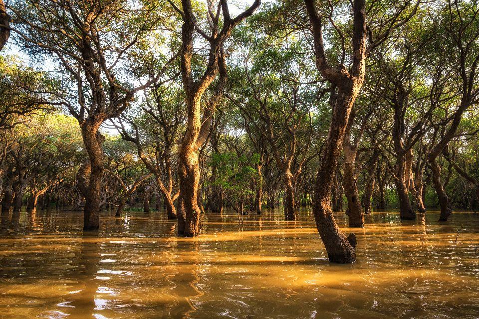 The Tonlé Sap Lake , Tonlé Sap, Cambodia , Cambodia