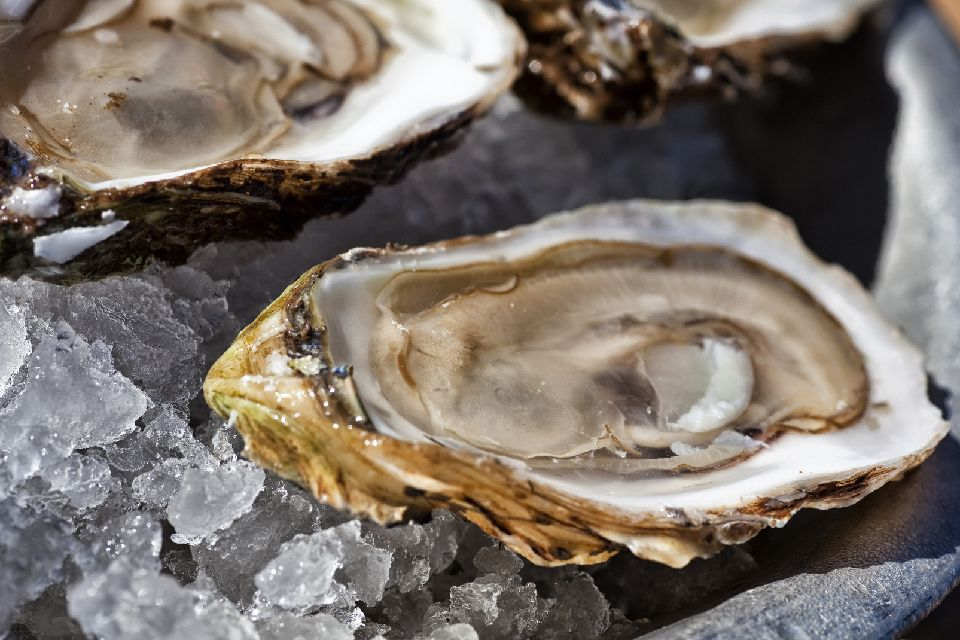 Las ostras de Marennes-Oléron , Francia