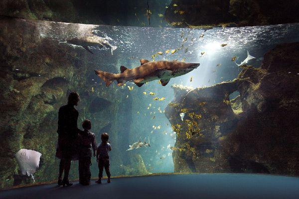 Aquarium de la Rochelle , L'aquarium de La Rochelle , France