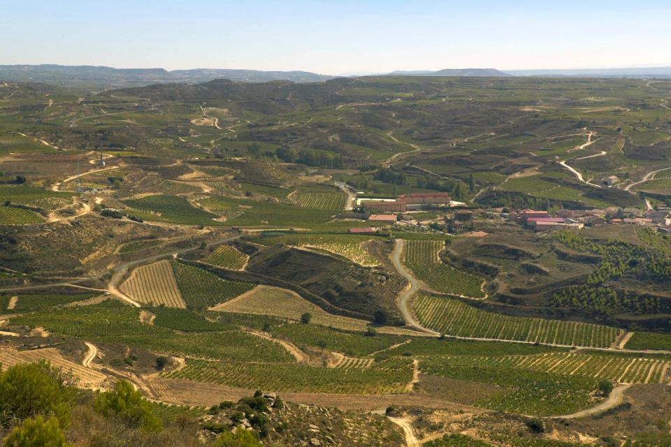 La cultura viticola , Spagna