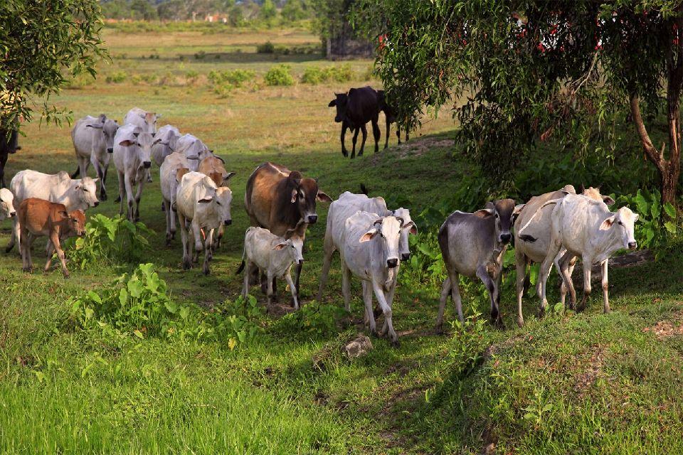 La faune , L'agriculture cambodgienne , Cambodge